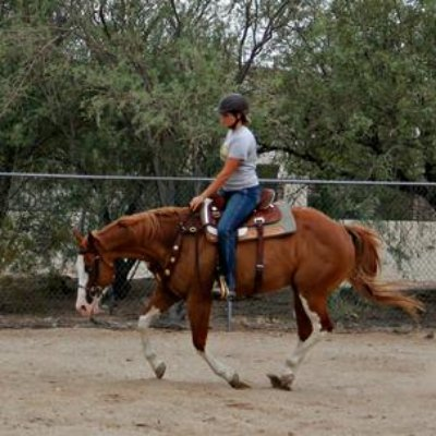 South Mountain School Of Horsemanship