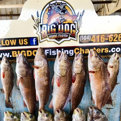 Big dog fishing charters reds trout waterfront lodging for Fishing lessons near me