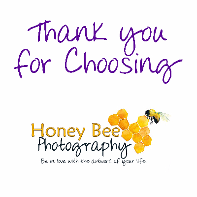 Honey Bee Photography