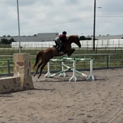 The 10 Best Horseback Riding Lessons Near Me 2019 // Lessons com